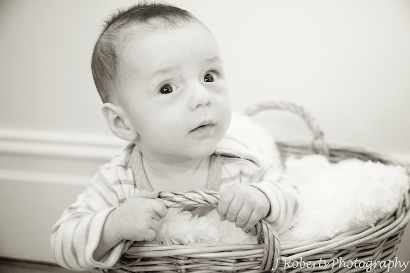 Sepia photo of baby in basket - baby portrait photography sydney