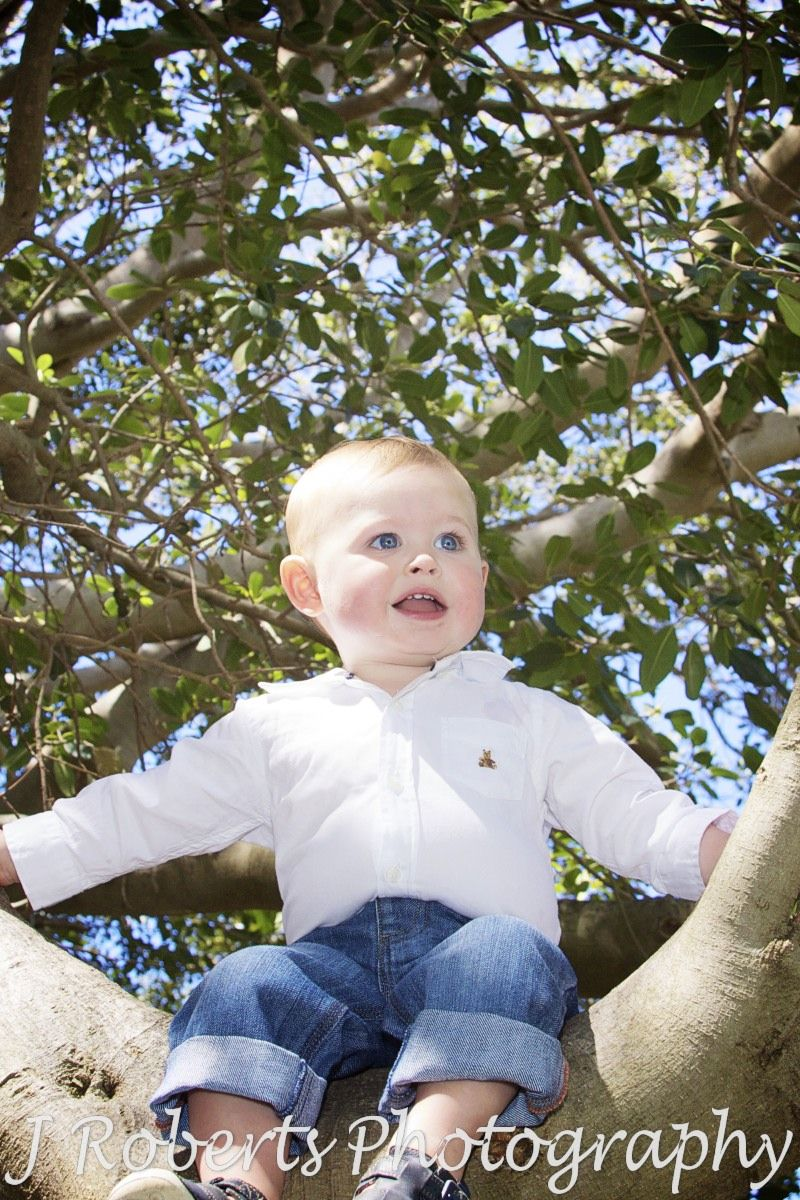 Little boy sitting in a tree - family portrait photography sydney