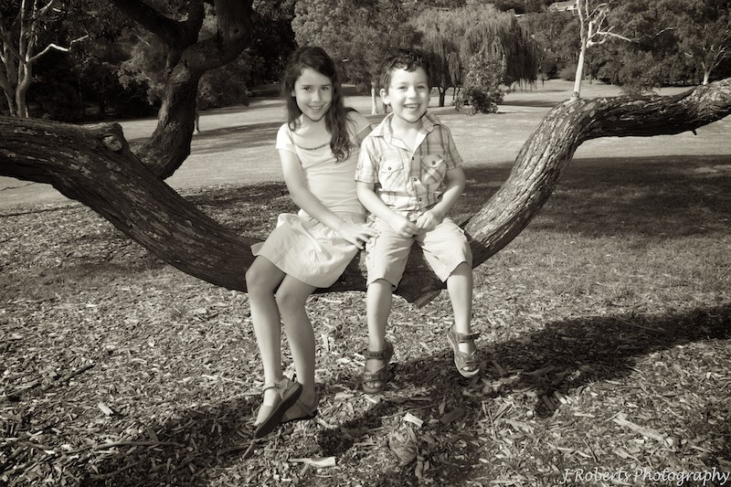 Siblings swinging in tree - family portraits