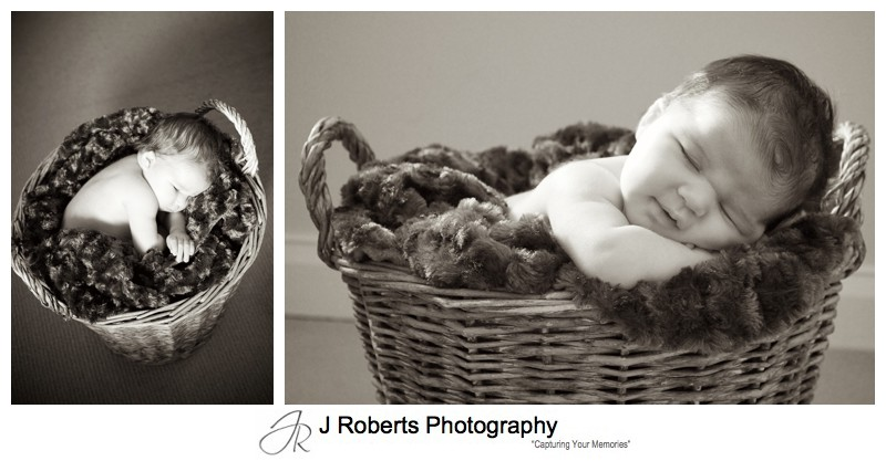 Sepia portraits of a newborn baby asleep in a basket - newborn portrait photography sydney