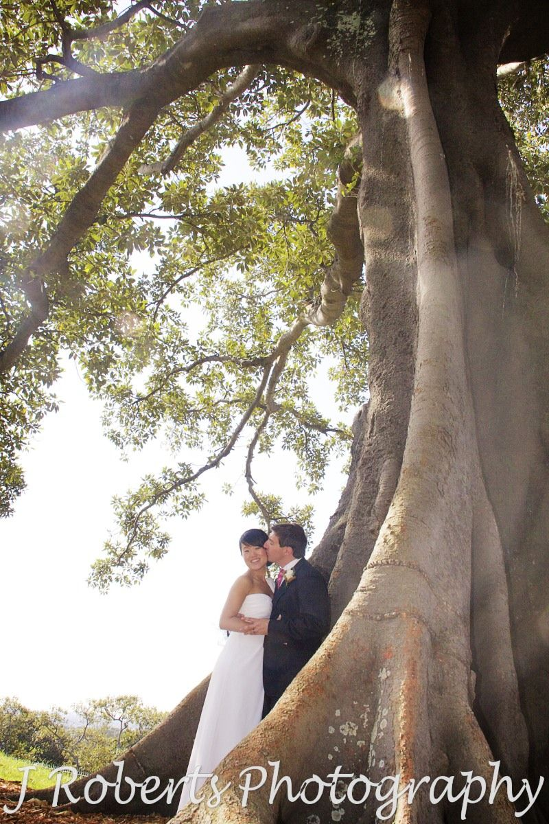 Groom kissing bride under fig trees at observatory hill - wedding photography sydney