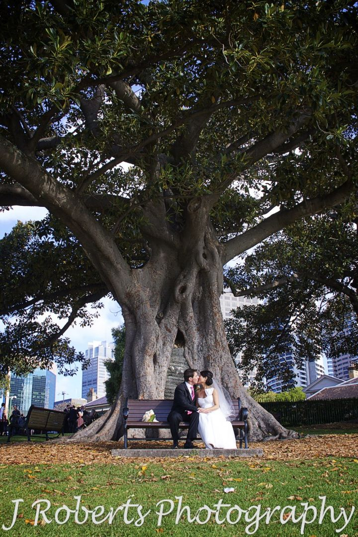 Couple kissing on bench under tree observatory hill sydney - wedding photography sydney