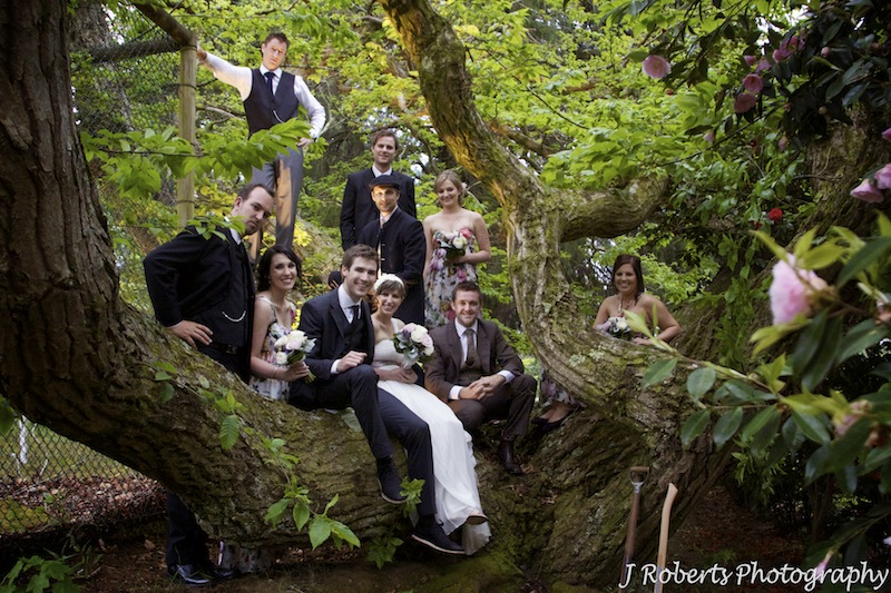 Bridal party in a tree - wedding photography