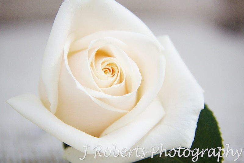 White rose corsage - wedding photography sydney